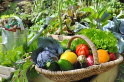 30190491 - basket of fresh vegetables in a placed vegetable garden